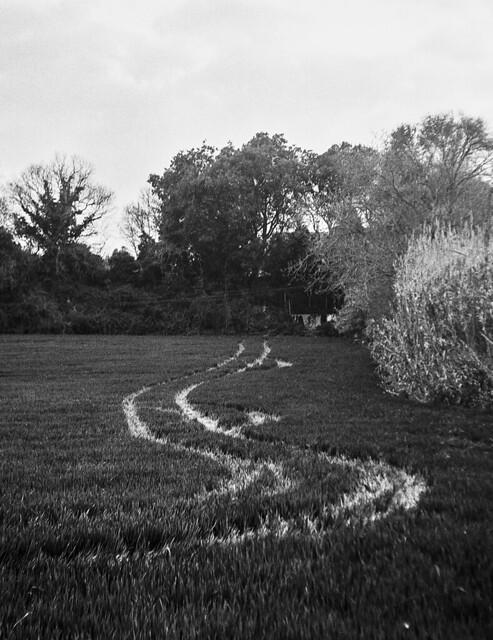 No trepitgeu el sembrat / Signals