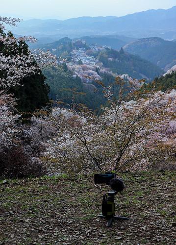 japan irl yoshino nara travel outdoors views nature kansai hanami sakura sunset