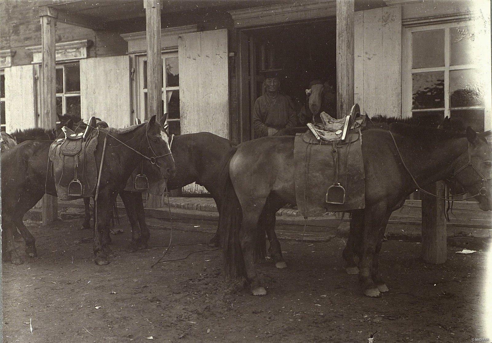 Урга. Лошади на базаре