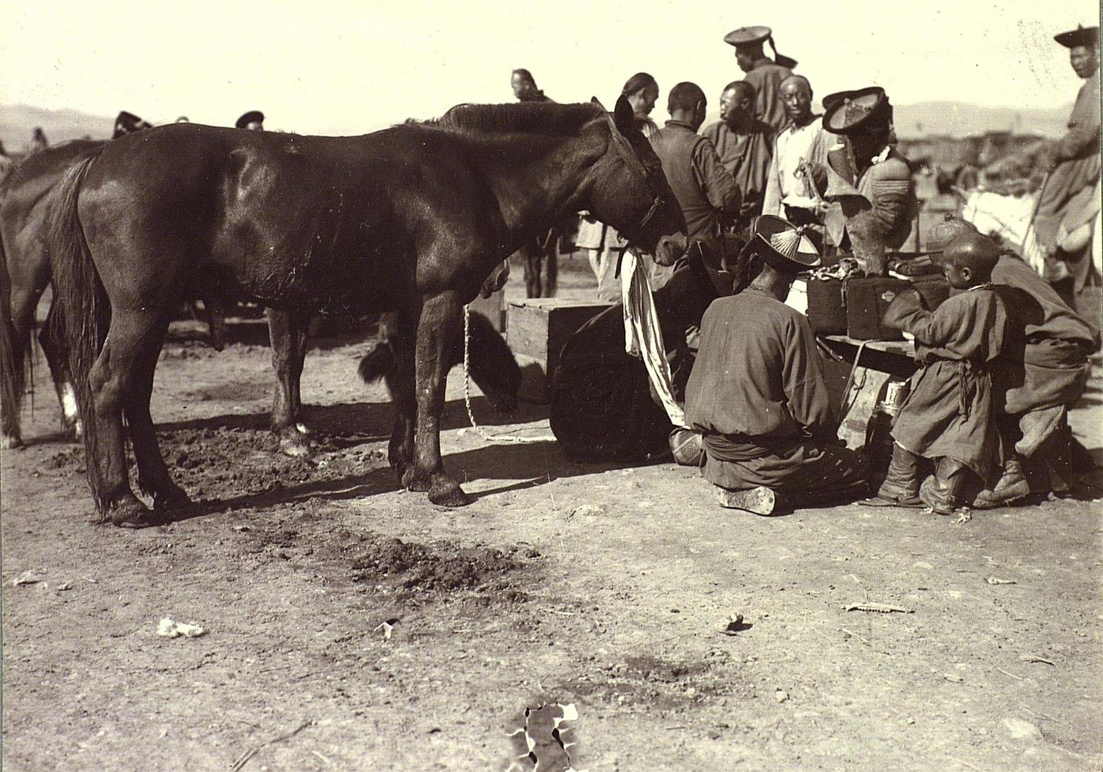 Урга. Лошади на базаре.