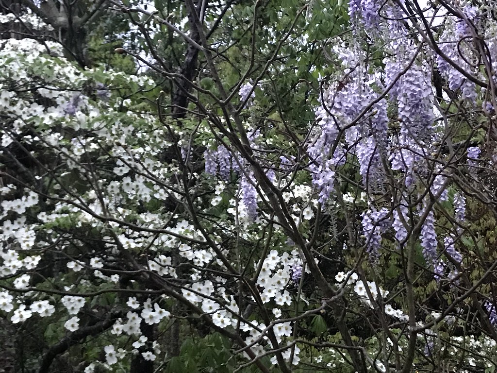 spring, backyard