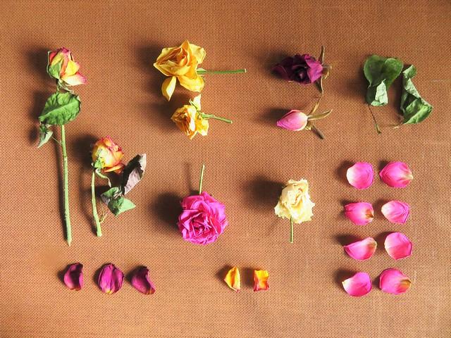 Getrocknete Rosen... / Dried Roses...