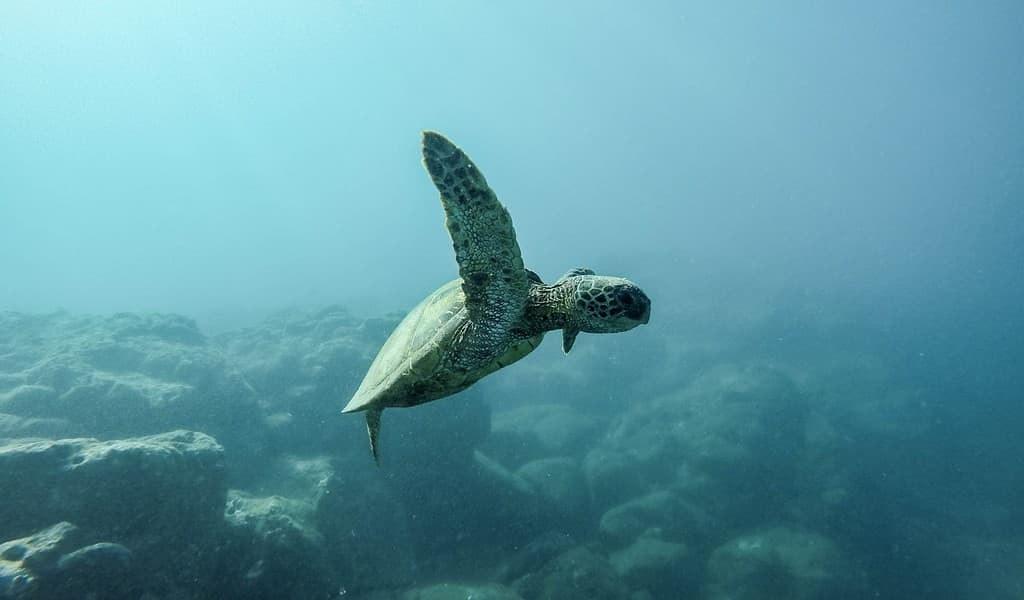 voici-comment-aider-à-surveiller-les-océans