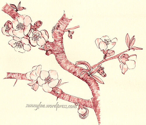 quince flowers in red ink