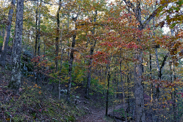 Colors of Autumn in Trees Along the West Mountain Trail (Hot Springs National Park)