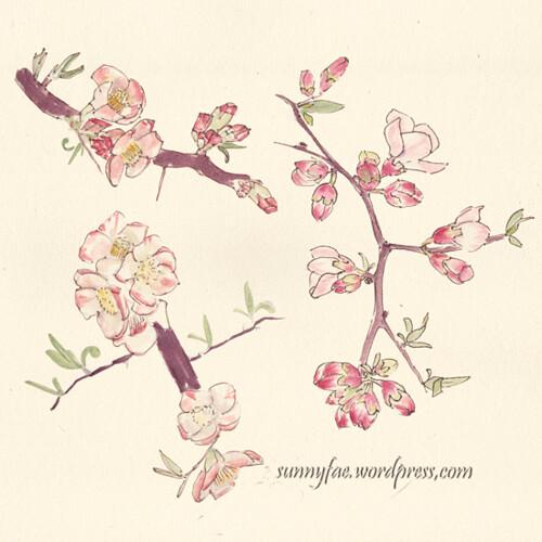 watercolour quince flower sketch