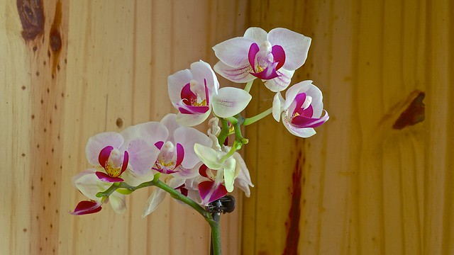 2021-04-04-Small-orchid