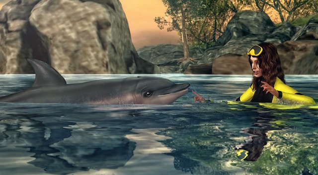 *To me, a dolphin is an angel of the sea* ❤️