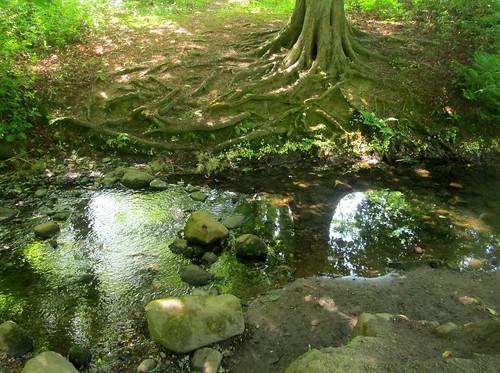 Back Burn + Tree Roots