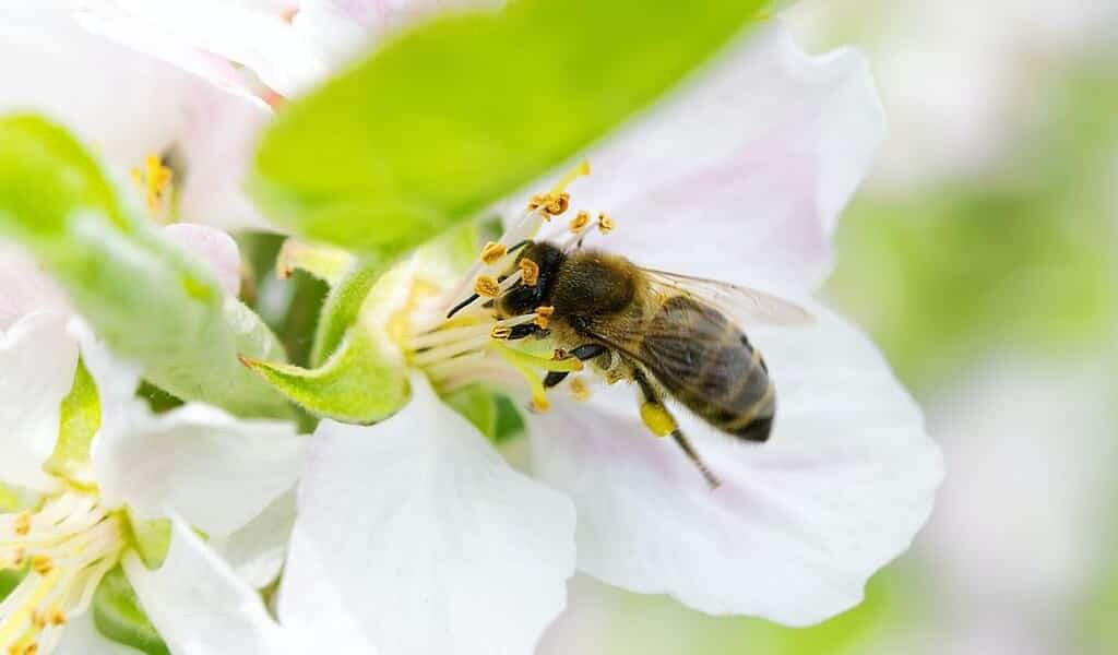 Oiseaux et abeilles : l'impact des pesticides