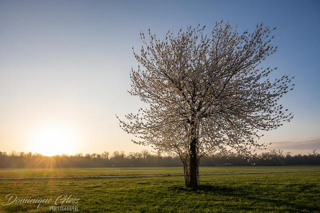 L'arbre solitaire - The lonely tree
