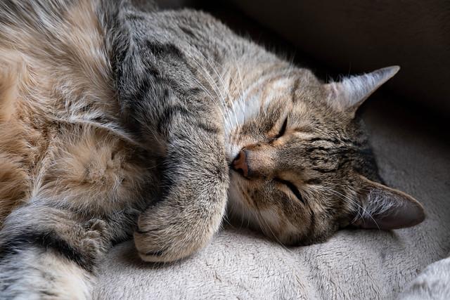 Cat Nap (Explore)