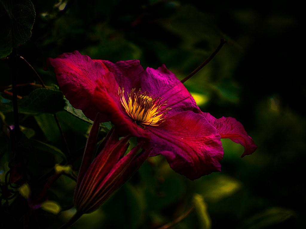 E250 Flower