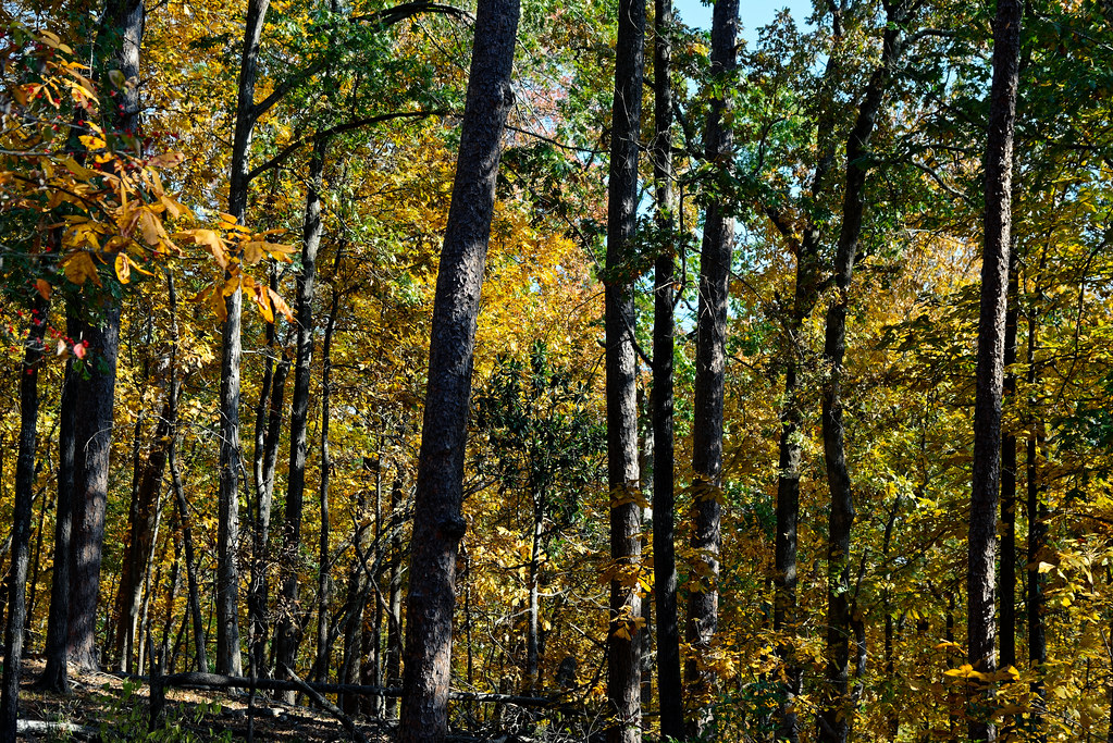 Woodland Colors of Autumn in Hot Springs National Park