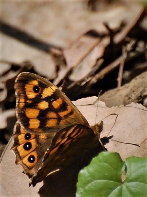 Papillon et son ombre