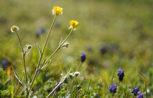 The awakening of meadow