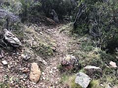 La montée à Piscia Cava (PR4/PR5) après les travaux d'entretien