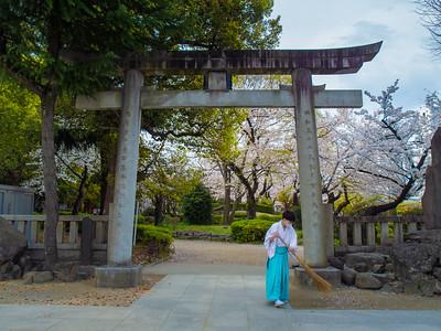 Nihon_arekore_02360_Sakura_2021_8_Fukagawa_Ushijima_Jinja_100_cl