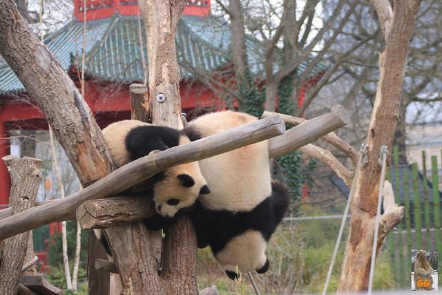 Besuch Zoo Berlin 02.04.21017