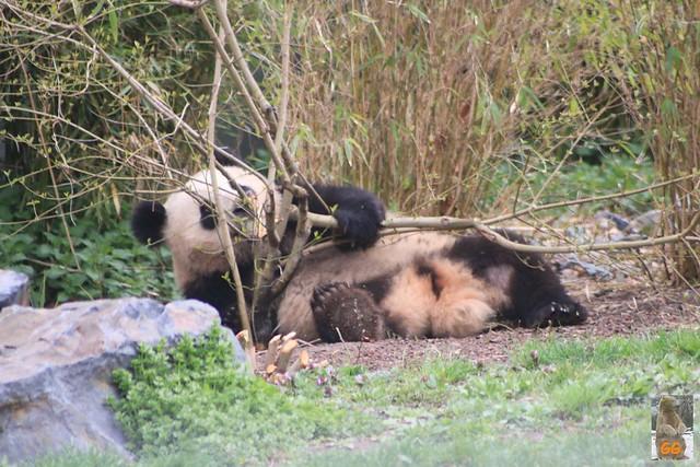 Besuch Zoo Berlin 02.04.21022