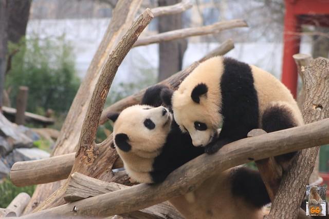 Besuch Zoo Berlin 02.04.21011