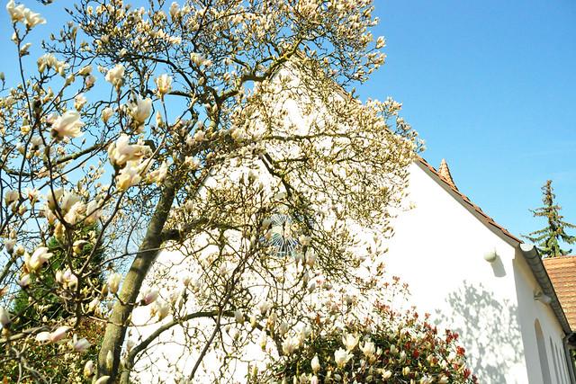 April 2021 ... Friedhof Neckarhausen ... Brigitte Stolle