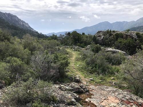 Le sentier à l'arrivée vers  Piscia Cava (PR4/PR5) après les travaux d'entretien