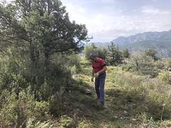 Le sentier après les travaux à l'arrivée à Piscia Cava (PR4/PR5)