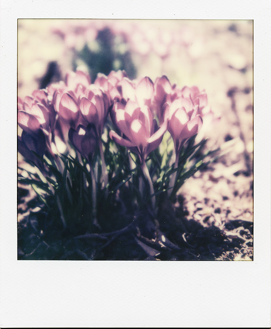 instant-spring