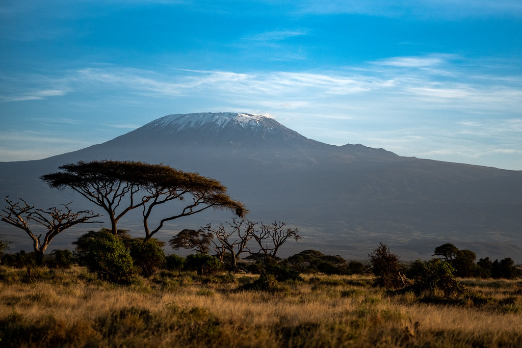 The iconic acacia tree in front of Mount Kilimanjaro