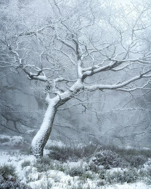 Snowy Woodland 10