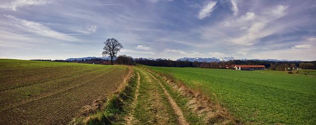 Feldweg mit Gebirgsblick