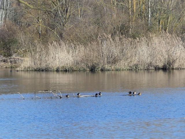 Vogelschutzgebiet Garstadt