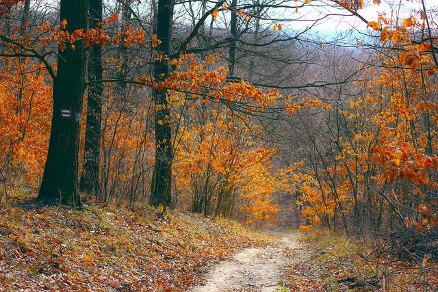 March forest path / Erdei út márciusban