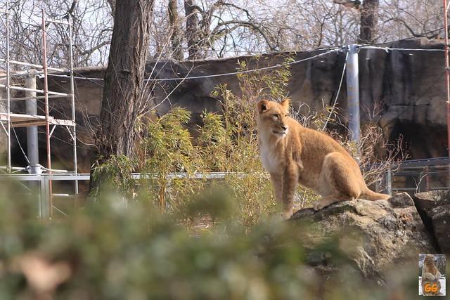 Besuch Zoo Berlin 02.04.21029