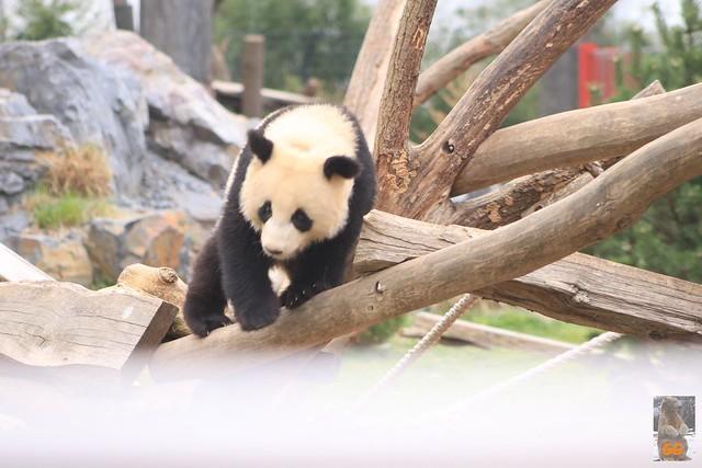 Besuch Zoo Berlin 02.04.21012