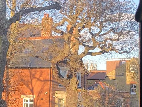 tree shadow view london