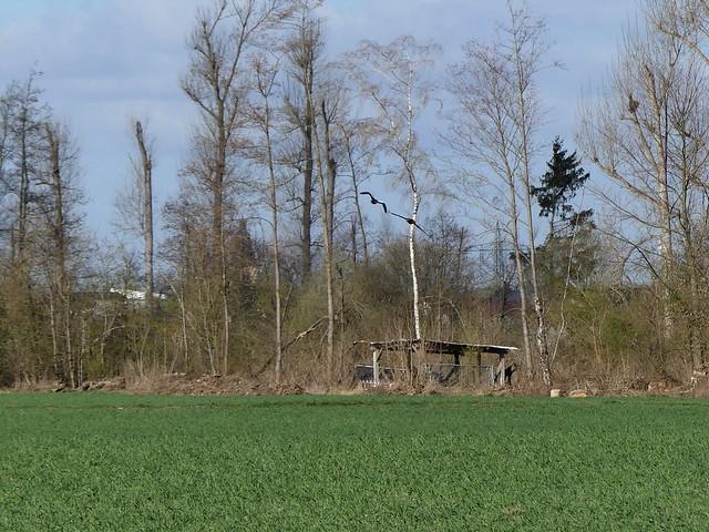 NSG Hergershäuser Wiesen