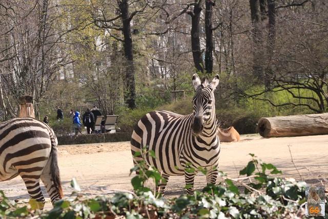 Besuch Zoo Berlin 02.04.21041