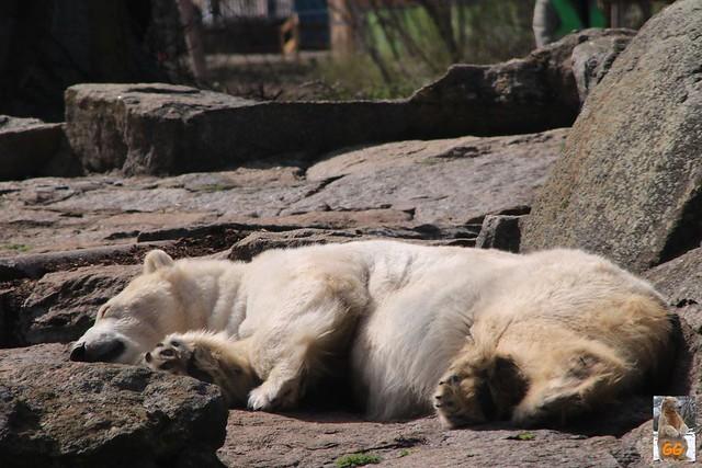 Besuch Zoo Berlin 02.04.21037