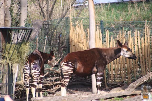 Besuch Zoo Berlin 02.04.21033