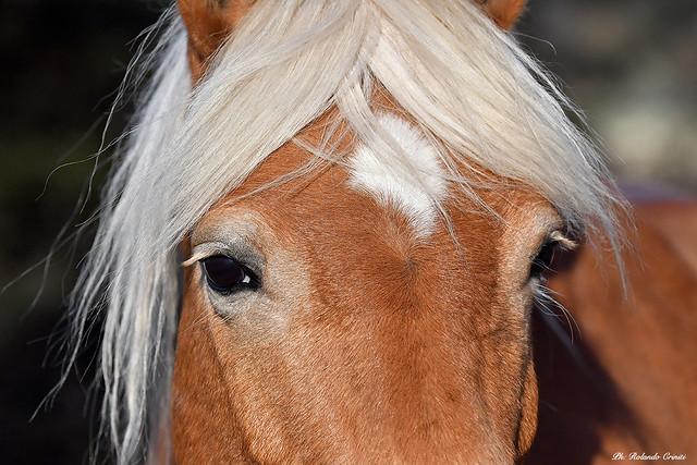Cavallo _016