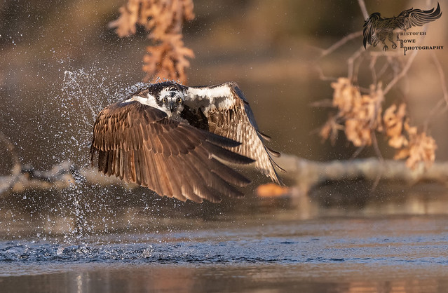 Osprey 4_4