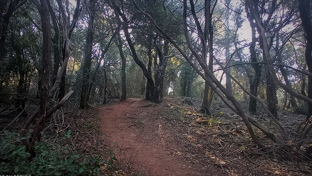 05-04-2021 Caminos por explorar.
