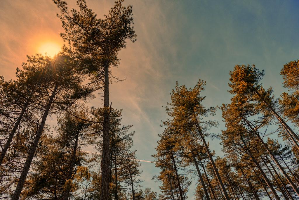 Sunbathing trees.