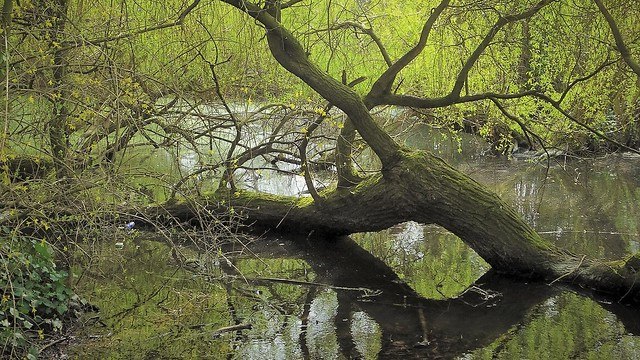 The Treetanic, still afloat but doomed