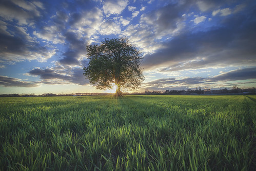 Lone tree, Kimberly