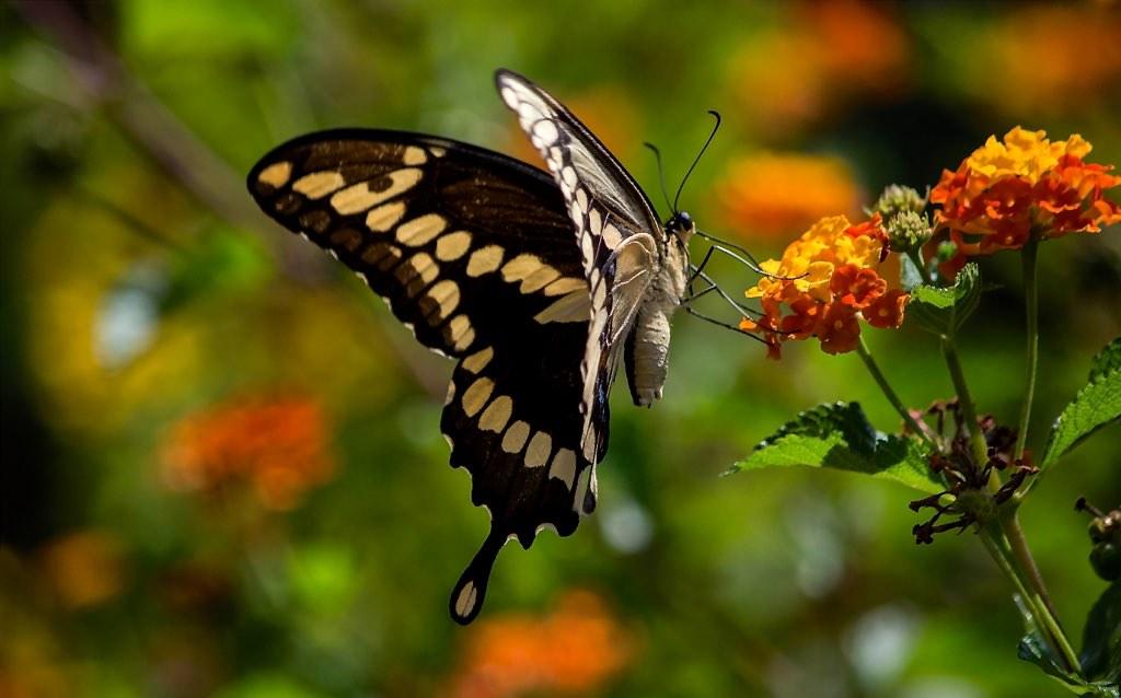 Spring Wings (4)
