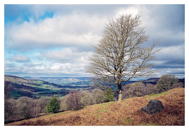 Peak District tree
