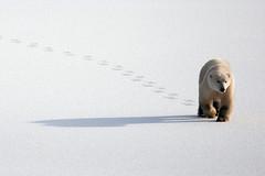 Jeannette Kok; Voetstappen in de sneeuw